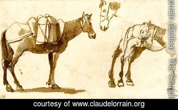 Claude Lorrain (Gellee) - Drawing of mules, including one full length